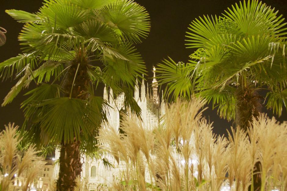 Le Palme al notte